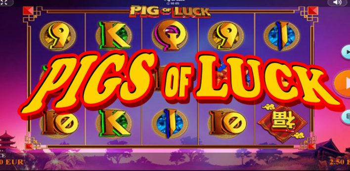 PIGS OF LUCK